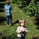 Fall Apple Picking at Log Cabin Orchard